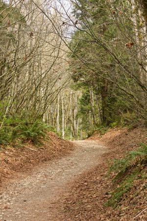 Path through Trees of Forest Background.