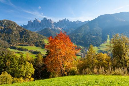 Foliage in the Italian Alps with sun