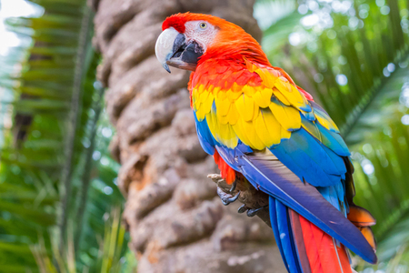 scarlet macaw in nature Colombia Stock Photo