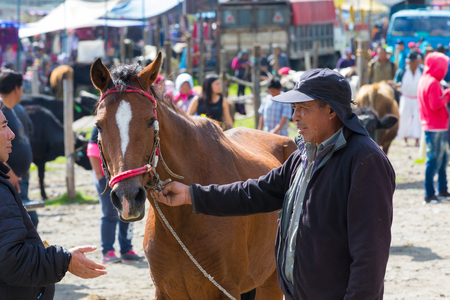 Otavalo Ecuador 2018 In this animal market in Otavalo a lot of farm animals are sold every Saturday. Here a negotiation. Stock fotó - 100298561