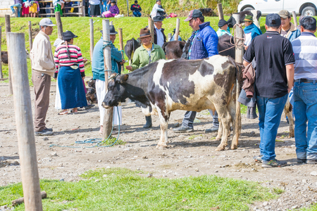 Otavalo Ecuador 2018 In this animal market in Otavalo a lot of farm animals are sold every Saturday. Here a negotiation.