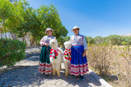 Peru September 2018 Inca descendants in traditional clothes accompanied by little huacayan alpacas 報道画像