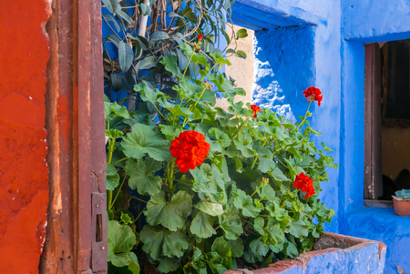 flowers adorn many alleys of Santa Catalina monastery and add another very suggestive colored note