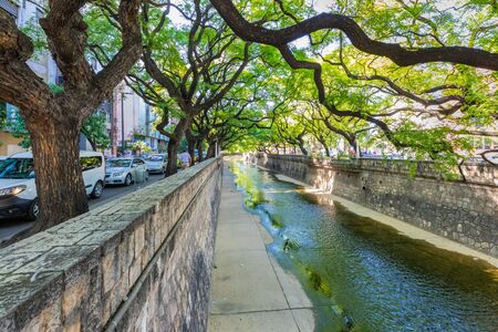 Cordoba Argentina December 14 urban vegetation in Cordoba with Canada river that crosses the city. Shoot on December 14, 2019