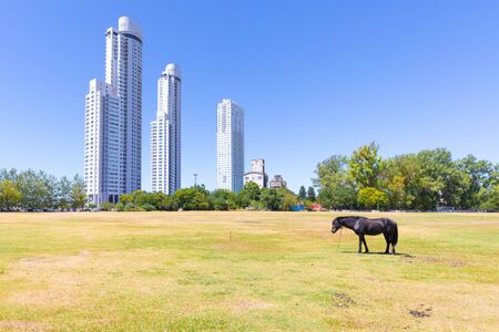 Argentina Rosario a horse and the Maui towers in the morning