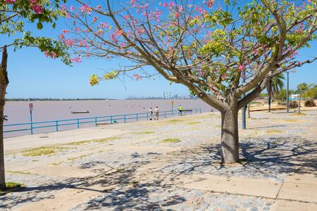 Rosario Argentina February 27 pedestrian area on Parana riverside in Southern Rosario with flowering trees. Shoot on February 23, 2020