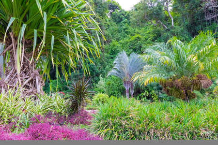 Costa Rica colorful flowers and tropical plants in the jungle