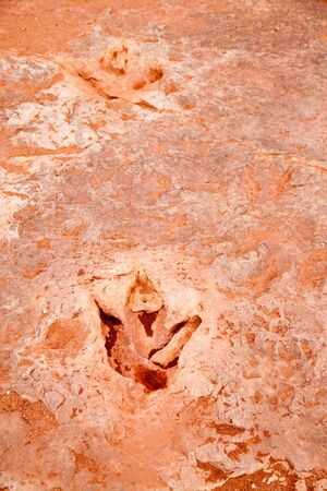 dinosaur tracks in bedrock near Tuba usa Archivio Fotografico