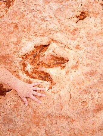 Dinosaurier-Fußabdruck mit der Hand einer Frau nebenan, um den Maßstab an der Stelle von Tuba City Arizona zu schaffen.