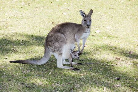 mamma canguro con bambino schiacciato nel marsupio