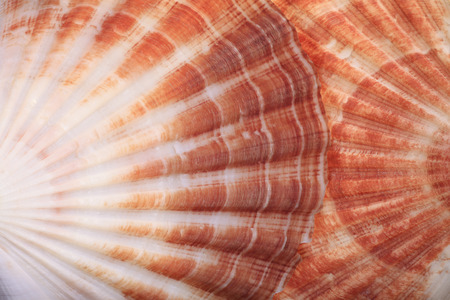 Macro View of Two Seashells Layered Stock Photo