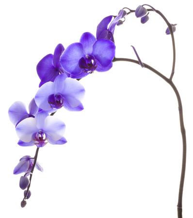Purple Orchid Framing a White Background Reklamní fotografie - 48420894