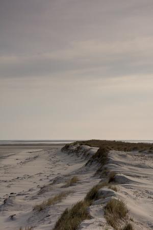 dunes: Dunes on the beach Stock Photo