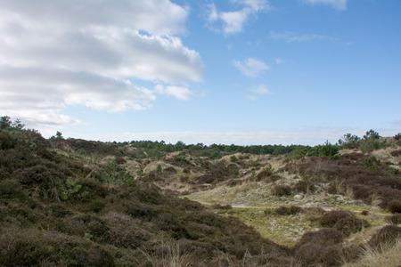 heathland: Heathland under a sunny sky Stock Photo