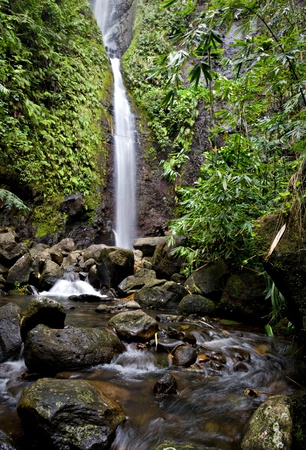 A waterfall flows into the river in a tropical forest in Tahiti.