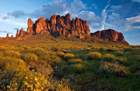 봄 야생화 전경에 피와 석양 미신 산, 애리조나, 미국의 광대 한보기. 스톡 콘텐츠