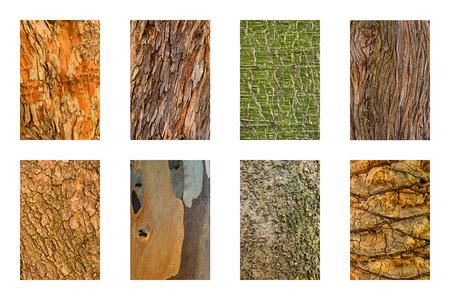 true myrtle: Set of 8 tree bark textures. Stock Photo