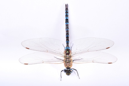 top view of a dragonfly on white background