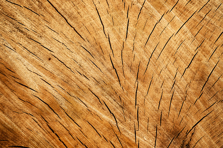 hornbeam: Brown cracked cross section of hornbeam tree trunk and stump texture