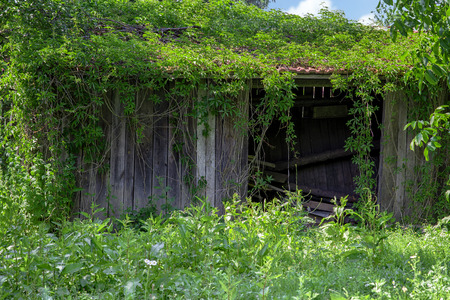outbuilding: Old wooden outbuilding or shed with red roof overgrown with ivy.