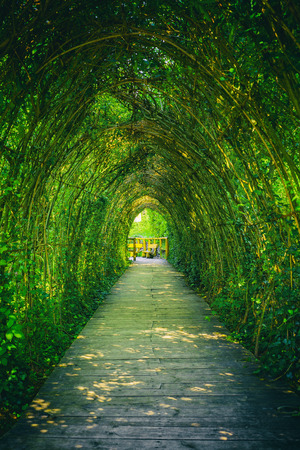 botanical garden: Ivy covered rack becomes a beautiful tunnel