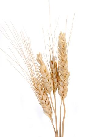 STalks of wheat against a white backgroud Zdjęcie Seryjne