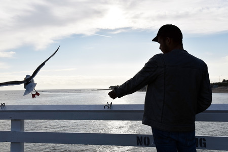 extending: Silhouette of a man extending his hand to a seagull on the pier