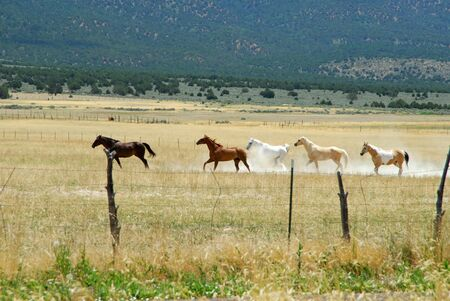 A head of horses running through the grass in the southwest 写真素材
