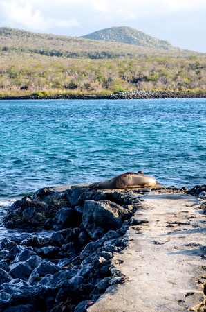 Isla Lobos, a small, rocky outcrop that acts as home to sea lion colonies off the coast of Isla San Cristobal, Galapagos Islands