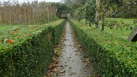 shrubbery: Garden Path