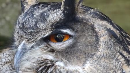 owl eye: Owl Eye