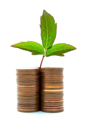 crecimiento planta: Pila de monedas de cobre con crecimiento de las plantas