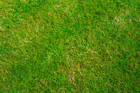 directly above: Grass lawn texture from directly above