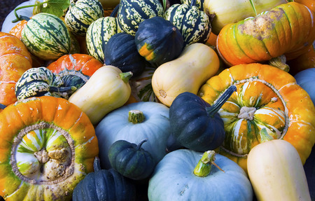 cucurbitaceae: Cucurbitaceae family of plants including Pumpkins Gourds and Squash