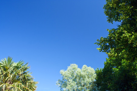 sky background: Clear blue sky framed around two sides with trees with copy space to add your own message
