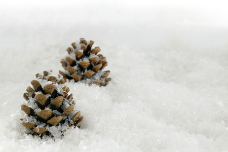 simplistic: Fir cones in a simplistic composed snow scene with copy space to add a custom message if required Stock Photo
