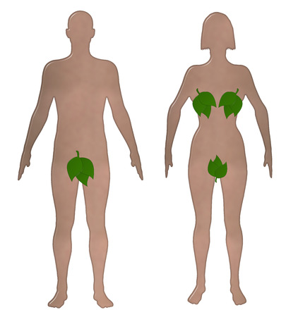 nude male: Toilet sign with an illustrated realistic shaped nude male and female with their private parts covered with leaves on an isolated white background with a clipping path