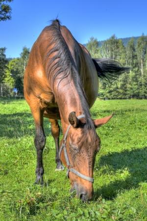 horse on pasture Stock Photo - 22549931