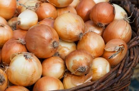 onions: Cebollas