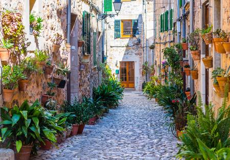 Pflanze Straße in Valldemossa, Mallorca Standard-Bild