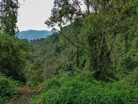 The rain forest, rwanda, Africa