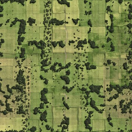 aerial views: A illustration of fields and meadow bird view