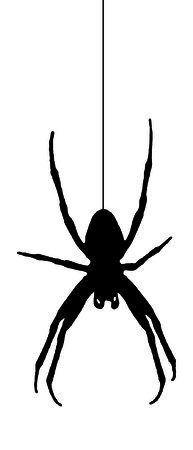 spider vector illustration Stock Vector - 3978699