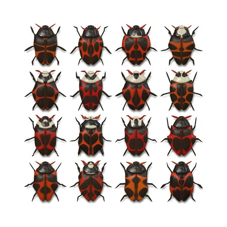 rear wing: An illustration of 16 different red bugs Stock Photo