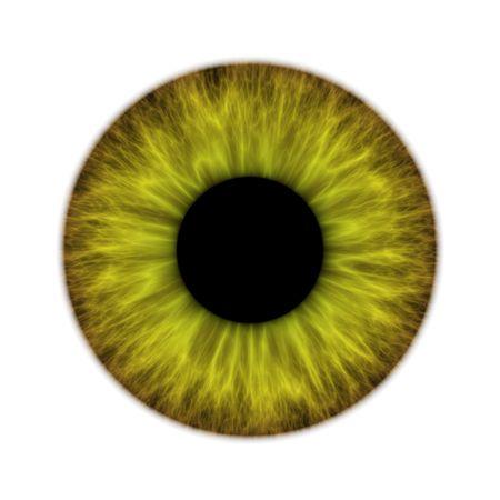 Un ejemplo de un área verde del iris aislado