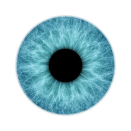 An illustration of a blue isolated iris illustration