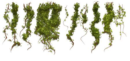 ivy vine: An illustration of some ivy textur pattern