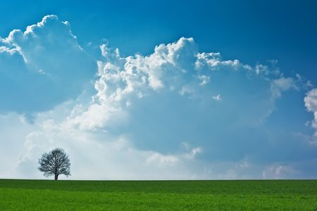 A photography of a blue sky and a tree Stock Photo