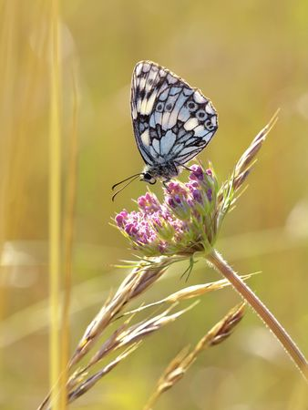 A photography of a beautiful butterfly in nature Stock Photo - 5161284