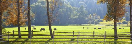 A photography of an autumn scenery with horses photo